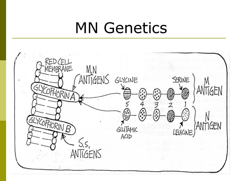 MN Genetics