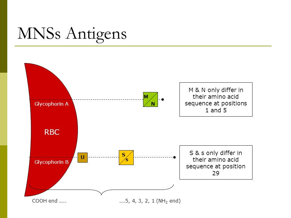 MNSs Antigens M & N only differ in their amino acid sequence at positions 1 and 5. M. Glycophorin A.