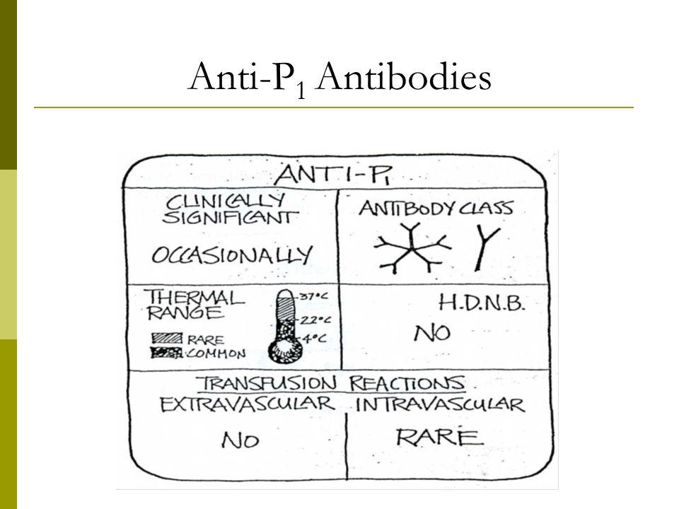 Anti-P1 Antibodies