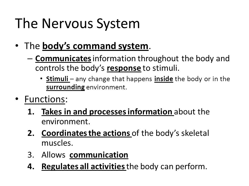 The Nervous System The body's command system. Functions: