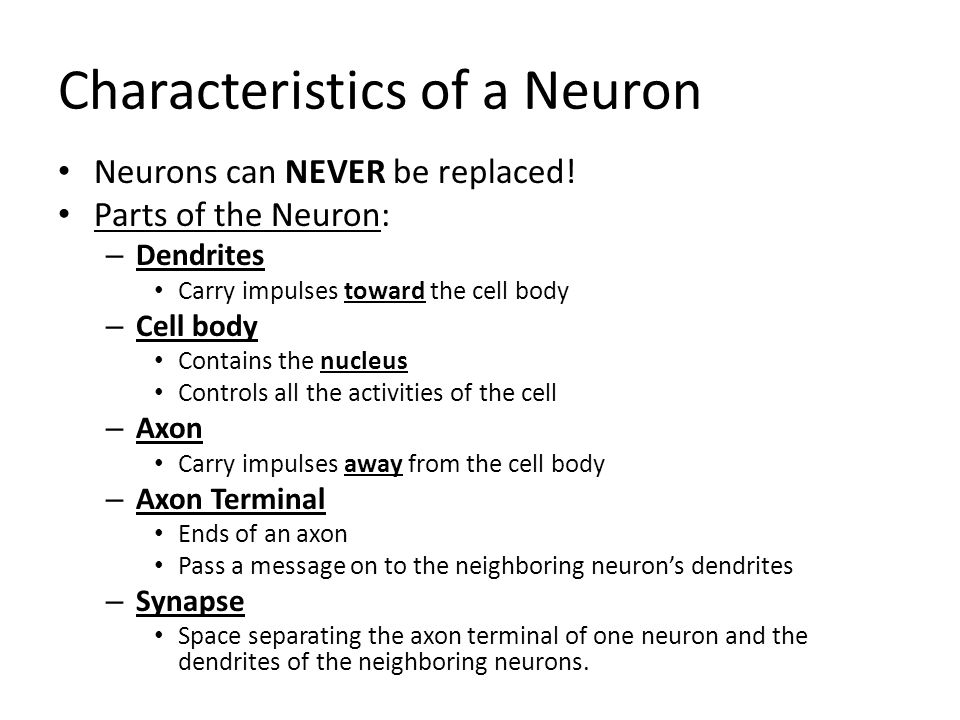 Characteristics of a Neuron