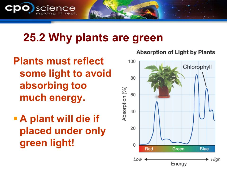 why are plants green Chlorophyll, the pigment that makes plants green, lies at the heart of  photosynthesis, the fundamental electrochemical enterprise that continues.