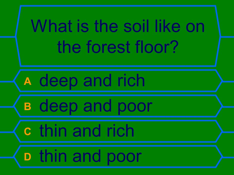 What is the soil like on the forest floor