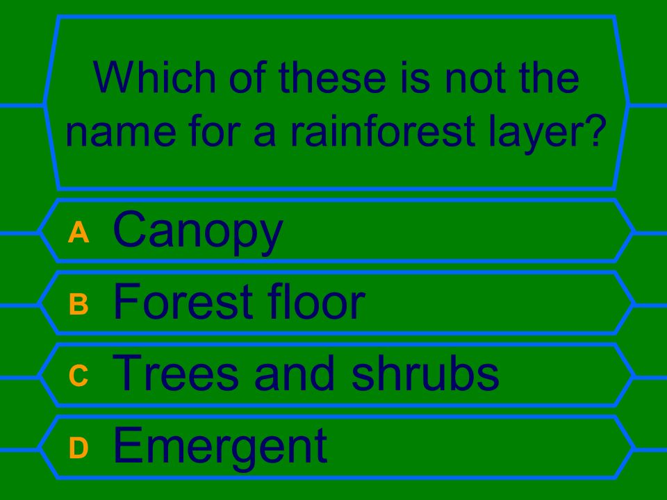 Which of these is not the name for a rainforest layer