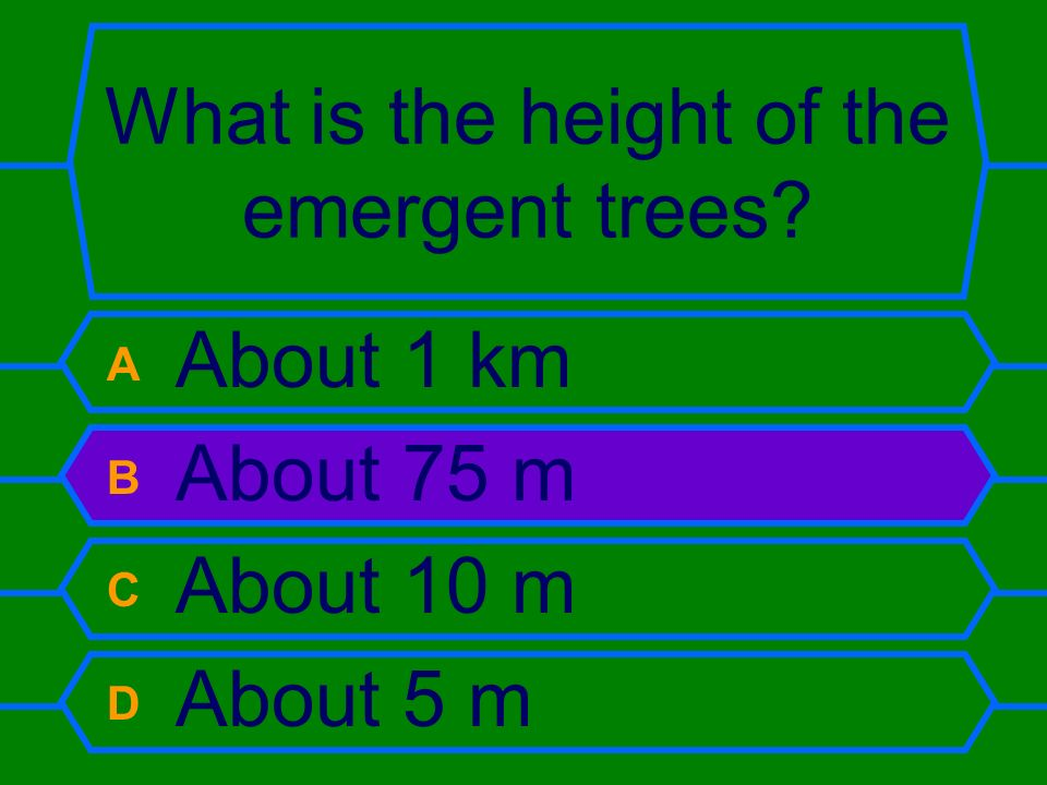 What is the height of the emergent trees