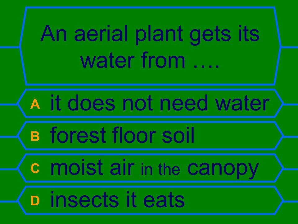 An aerial plant gets its water from ….