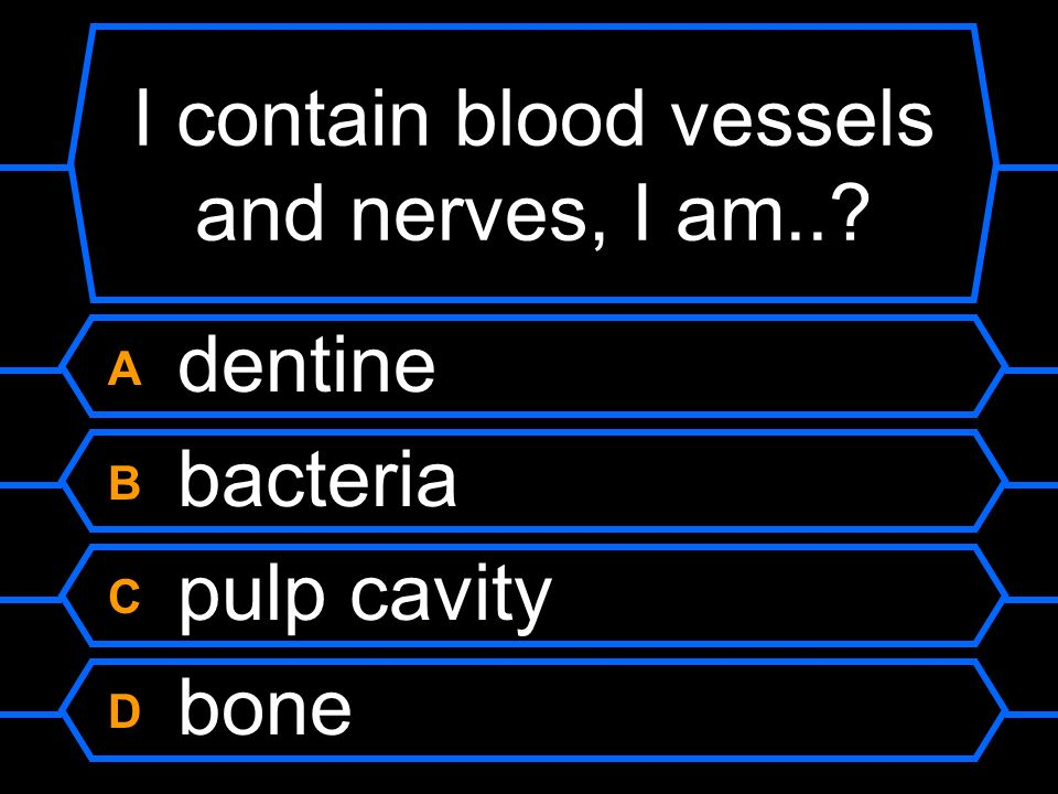 I contain blood vessels and nerves, I am..
