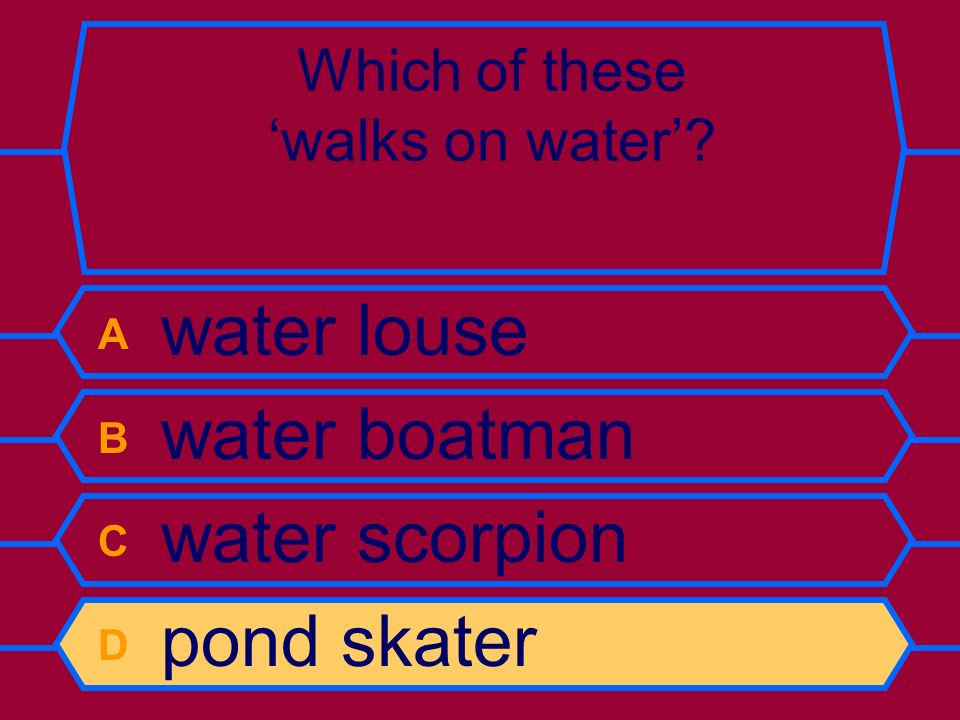 Which of these 'walks on water'