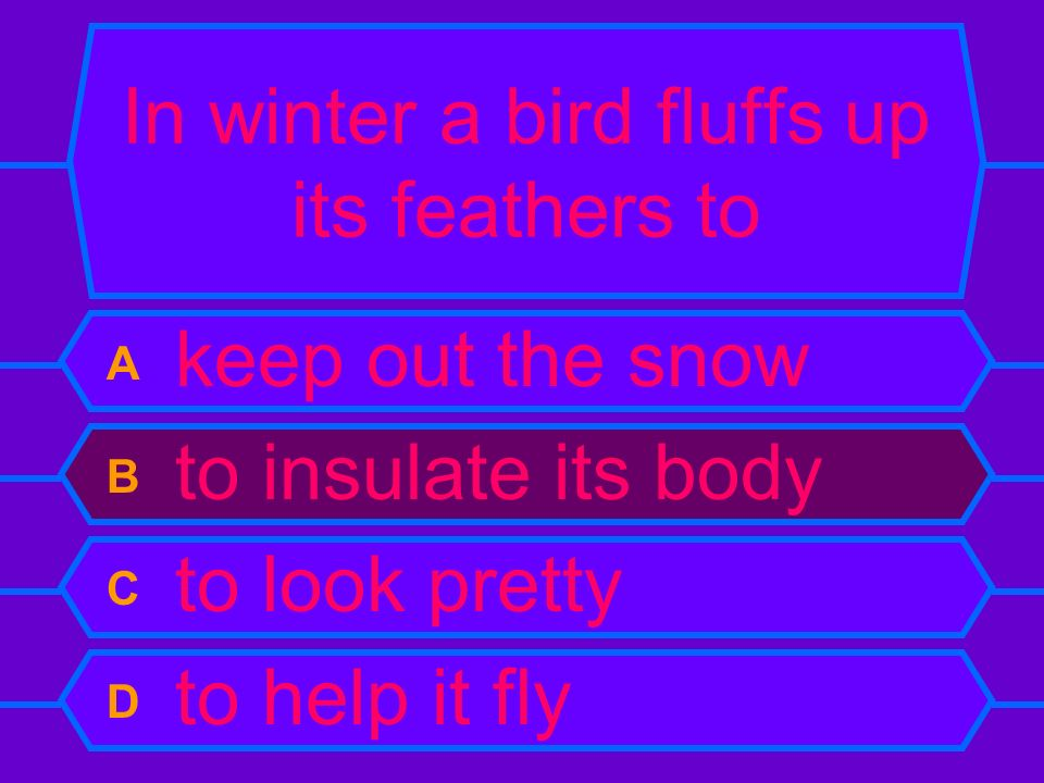 In winter a bird fluffs up its feathers to