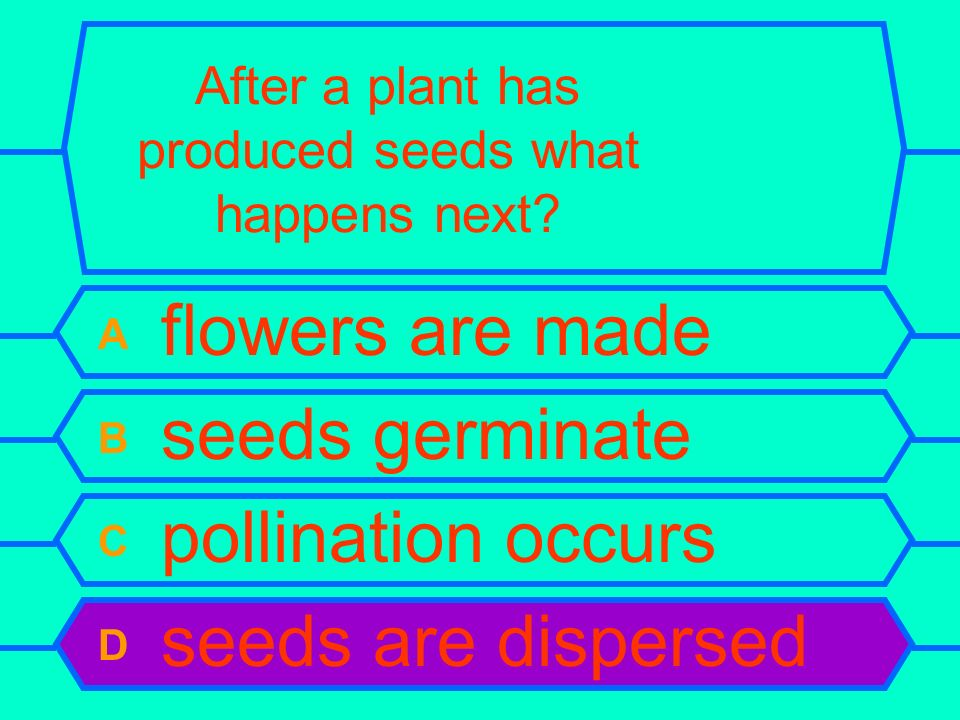 After a plant has produced seeds what happens next