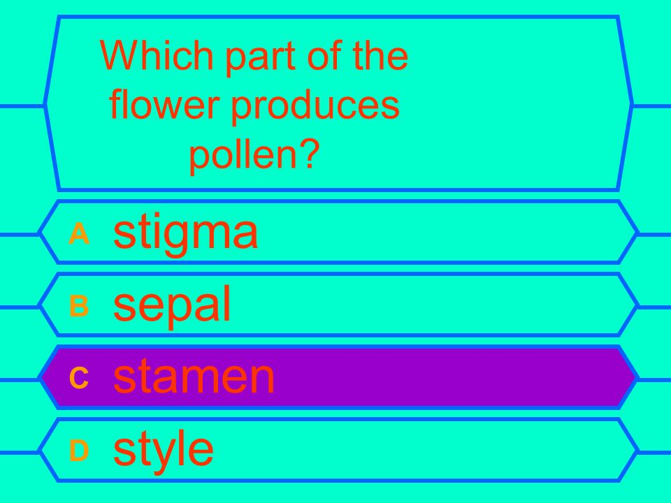 Which part of the flower produces pollen