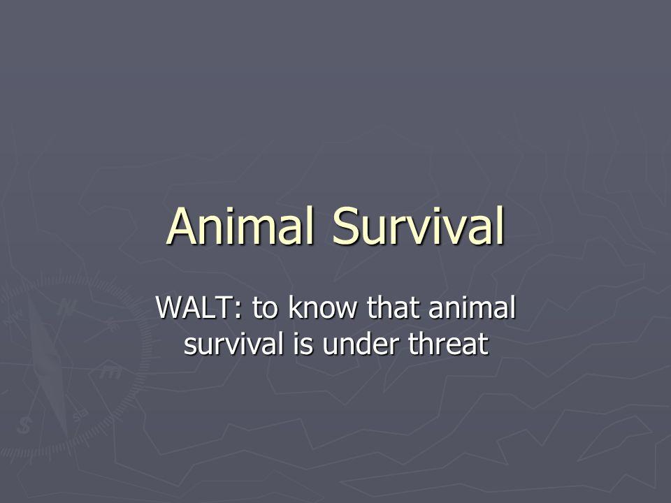 WALT: to know that animal survival is under threat