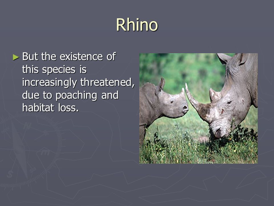 Rhino But the existence of this species is increasingly threatened, due to poaching and habitat loss.