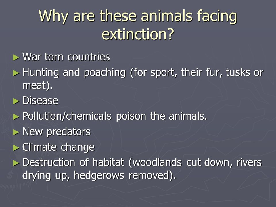 Why are these animals facing extinction