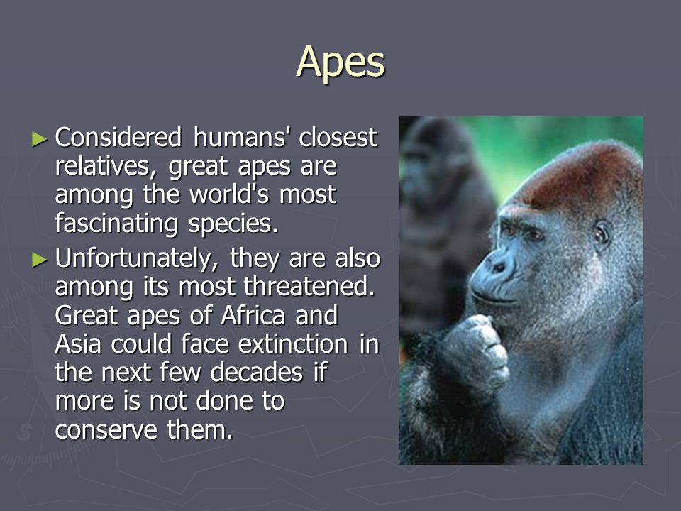 Apes Considered humans closest relatives, great apes are among the world s most fascinating species.