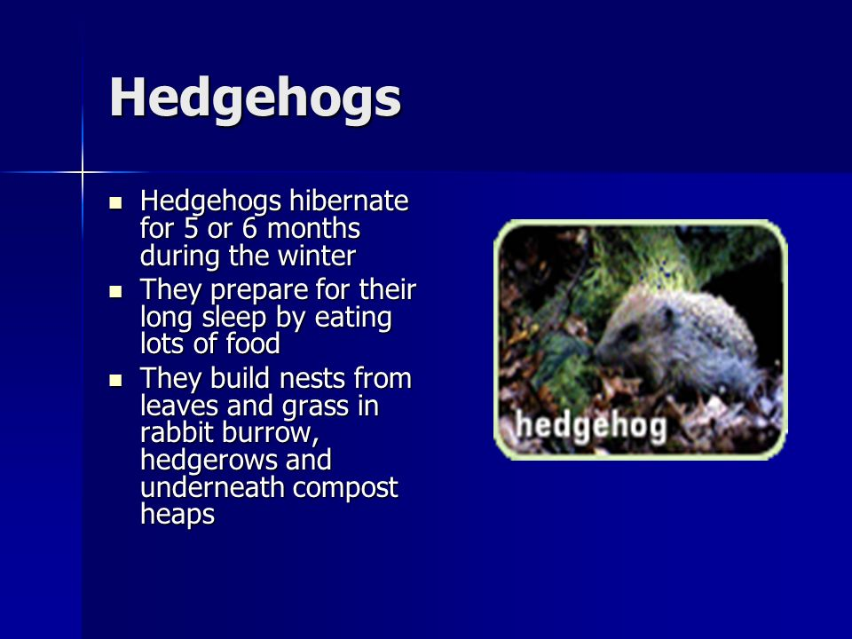 Hedgehogs Hedgehogs hibernate for 5 or 6 months during the winter