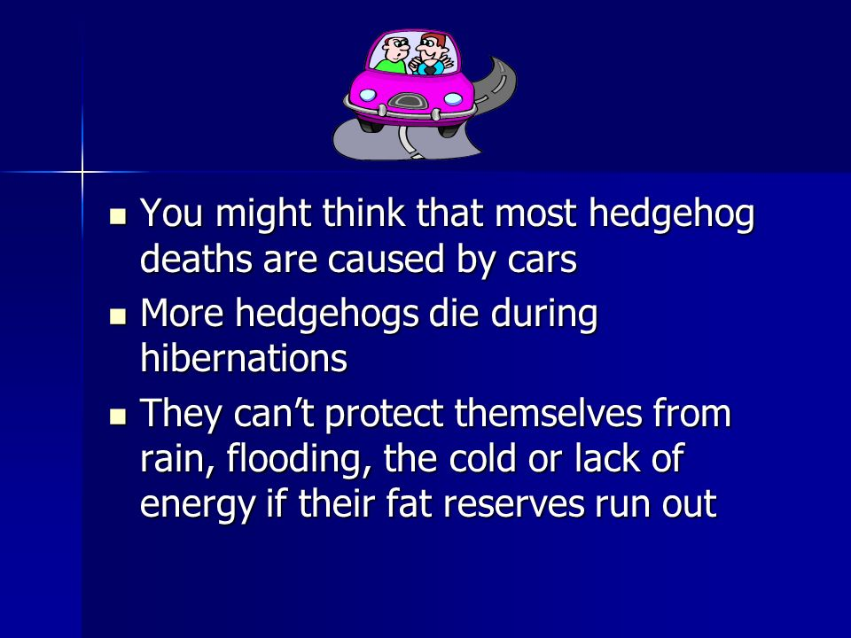 You might think that most hedgehog deaths are caused by cars