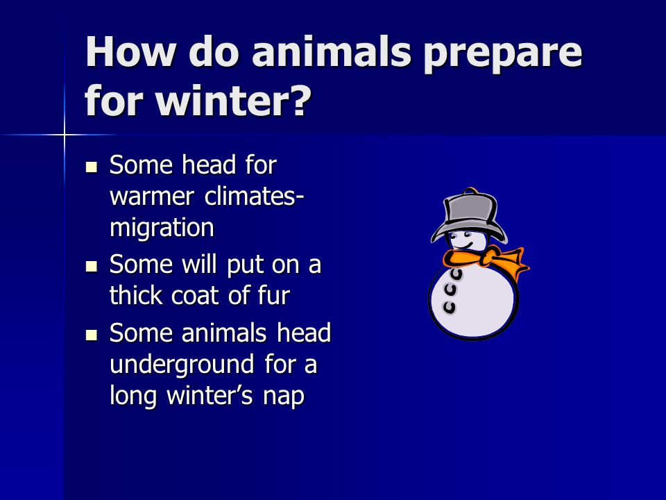 How do animals prepare for winter