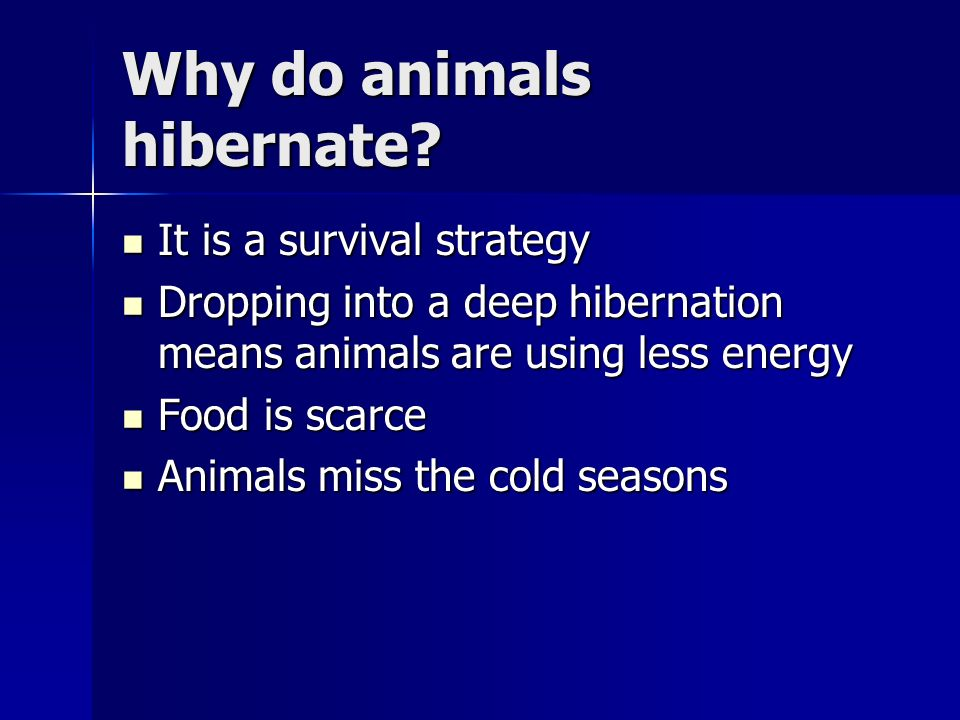 Why do animals hibernate