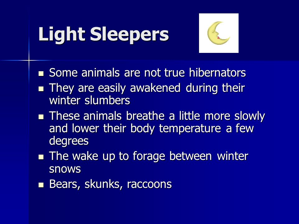Light Sleepers Some animals are not true hibernators