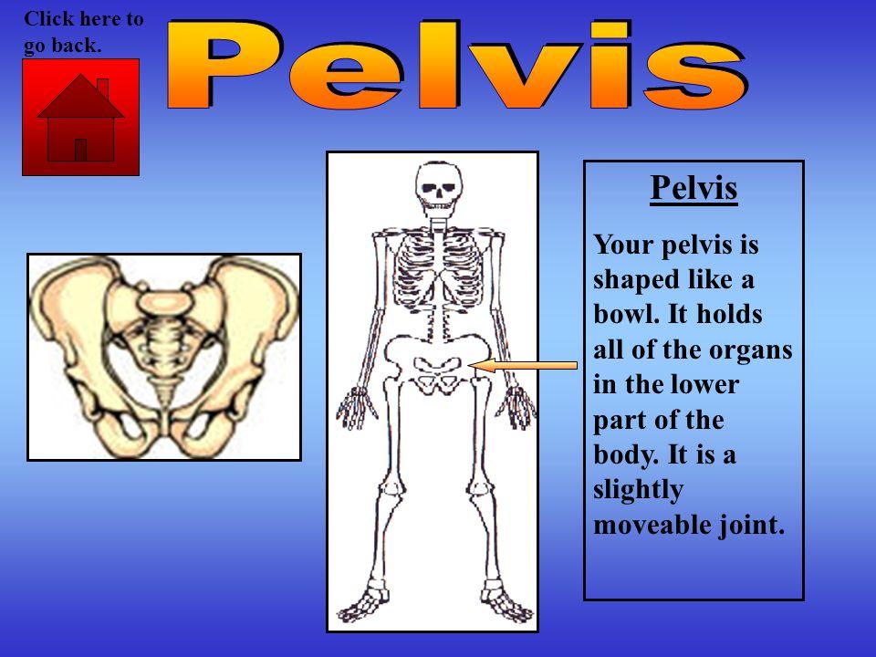 Click here to go back. Pelvis. Pelvis.