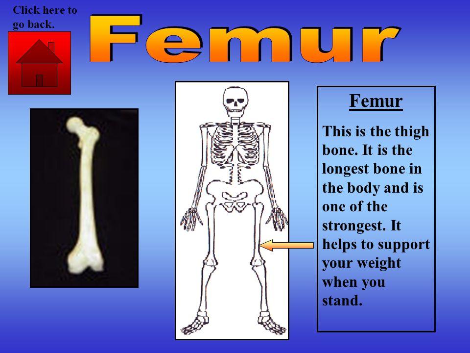 Click here to go back. Femur. Femur.
