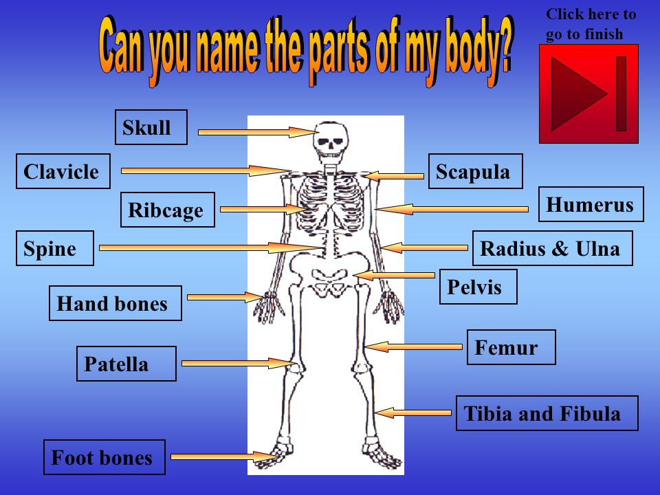 Can you name the parts of my body