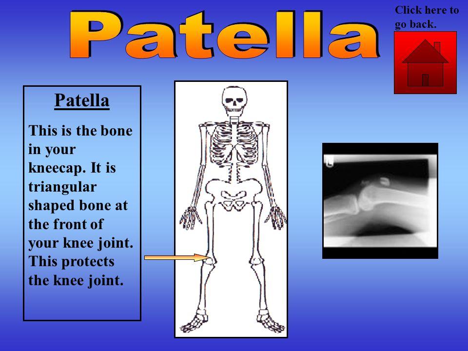 Click here to go back. Patella. Patella.