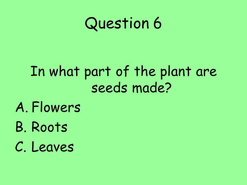 In what part of the plant are seeds made