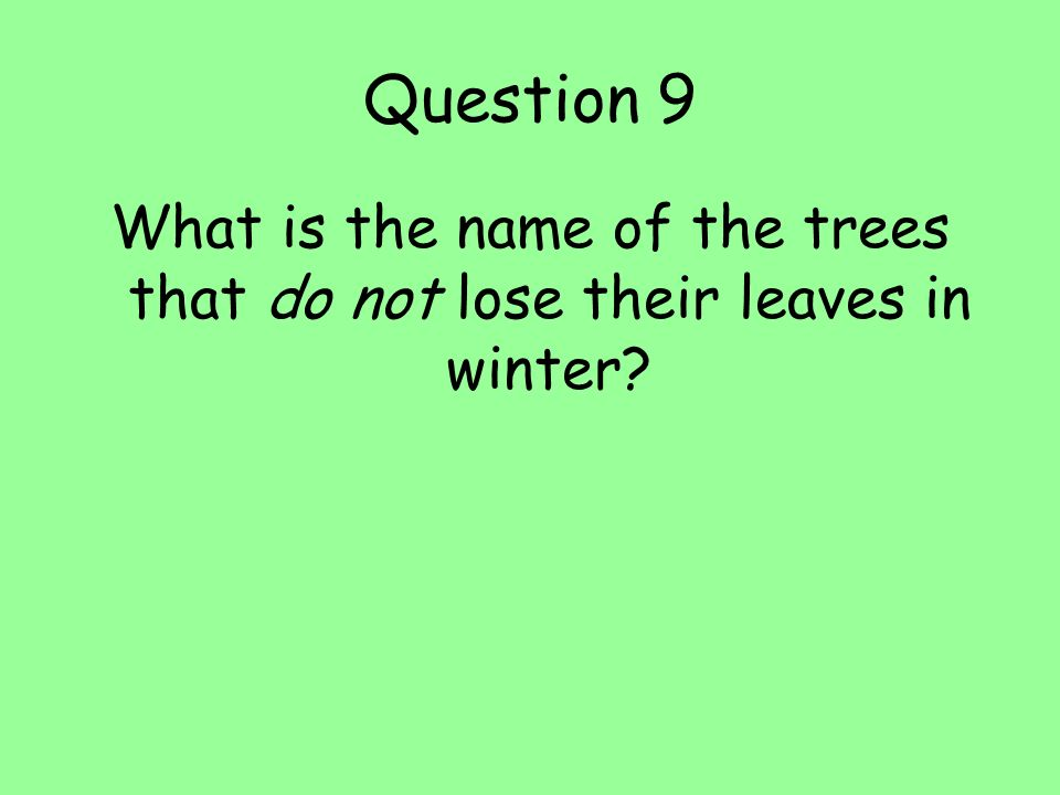 What is the name of the trees that do not lose their leaves in winter
