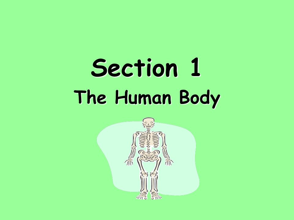 Section 1 The Human Body