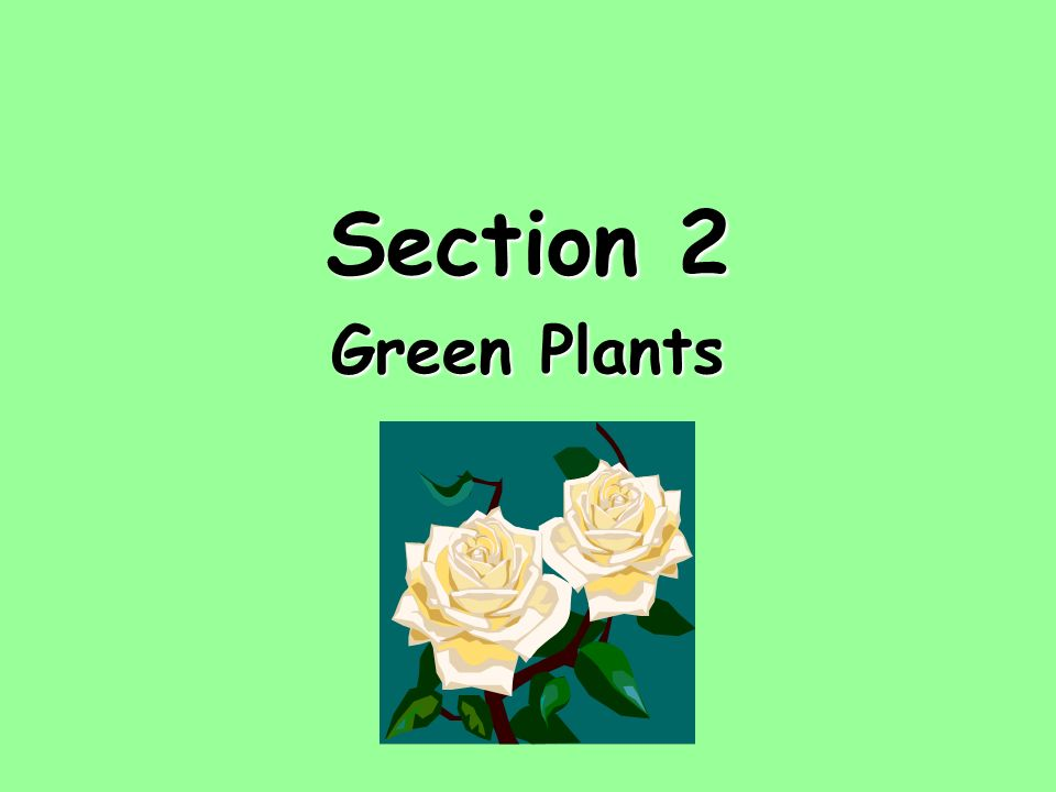 Section 2 Green Plants