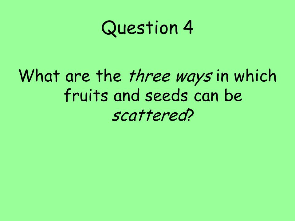 What are the three ways in which fruits and seeds can be scattered
