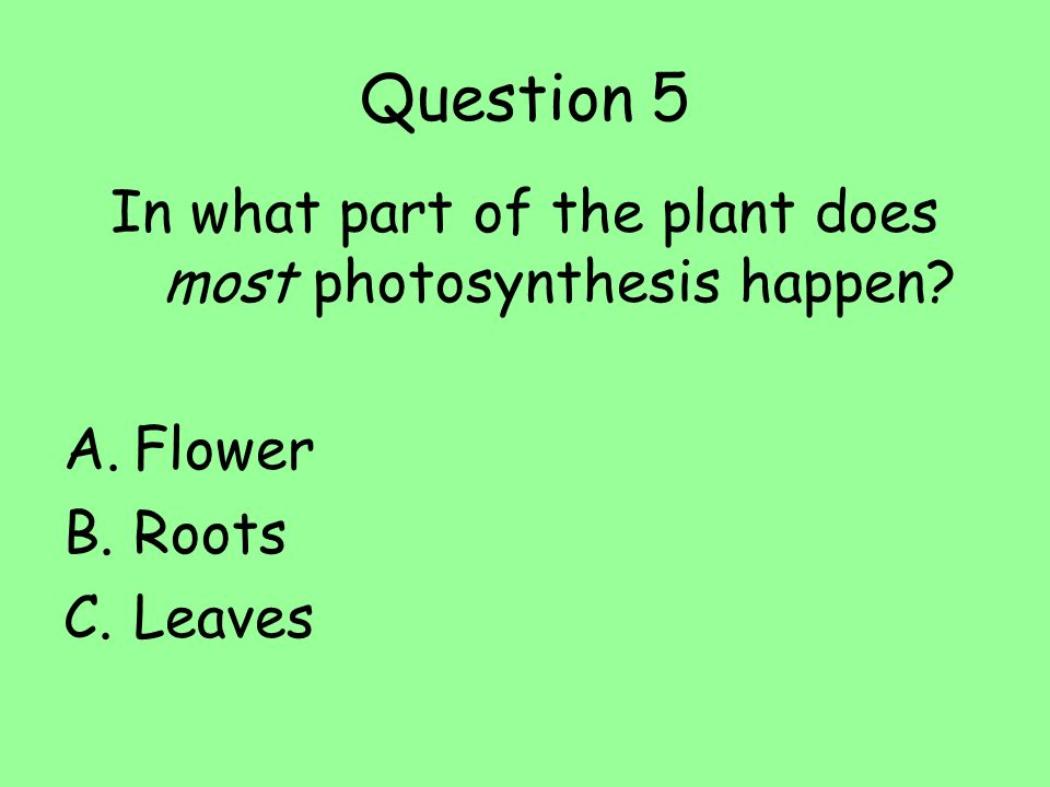 In what part of the plant does most photosynthesis happen