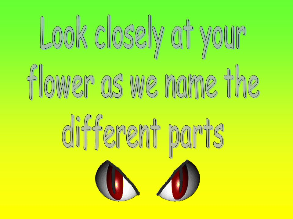 Look closely at your flower as we name the different parts