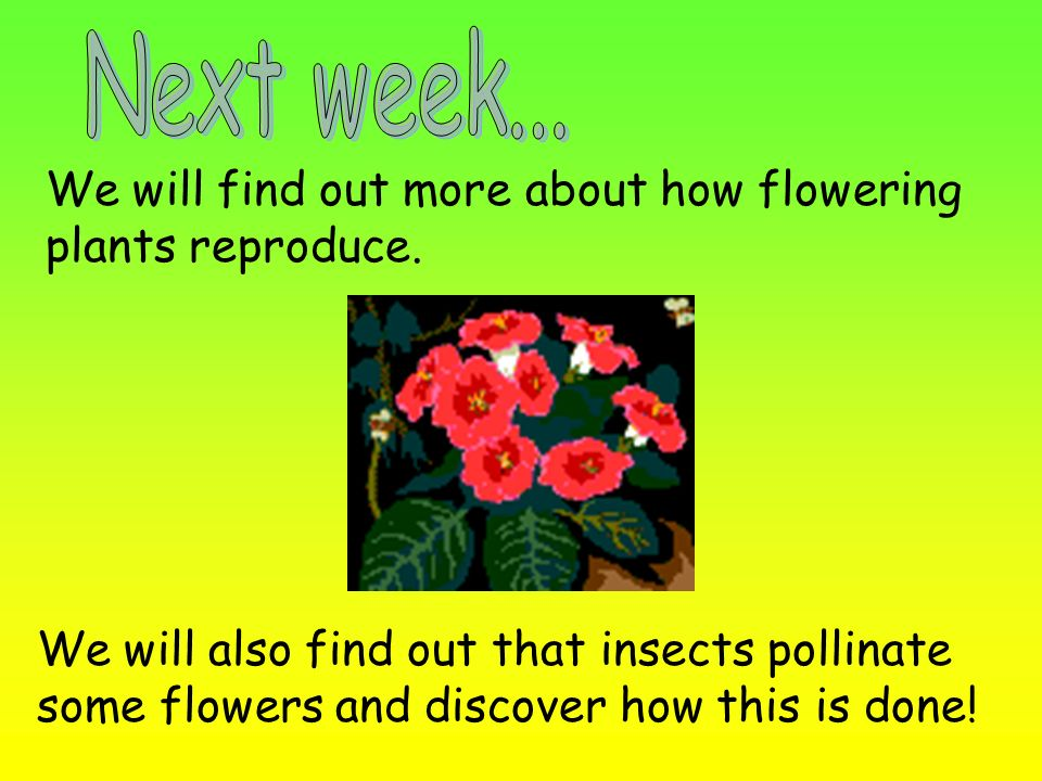 Next week... We will find out more about how flowering plants reproduce.