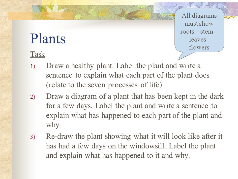 All diagrams must show roots – stem – leaves - flowers