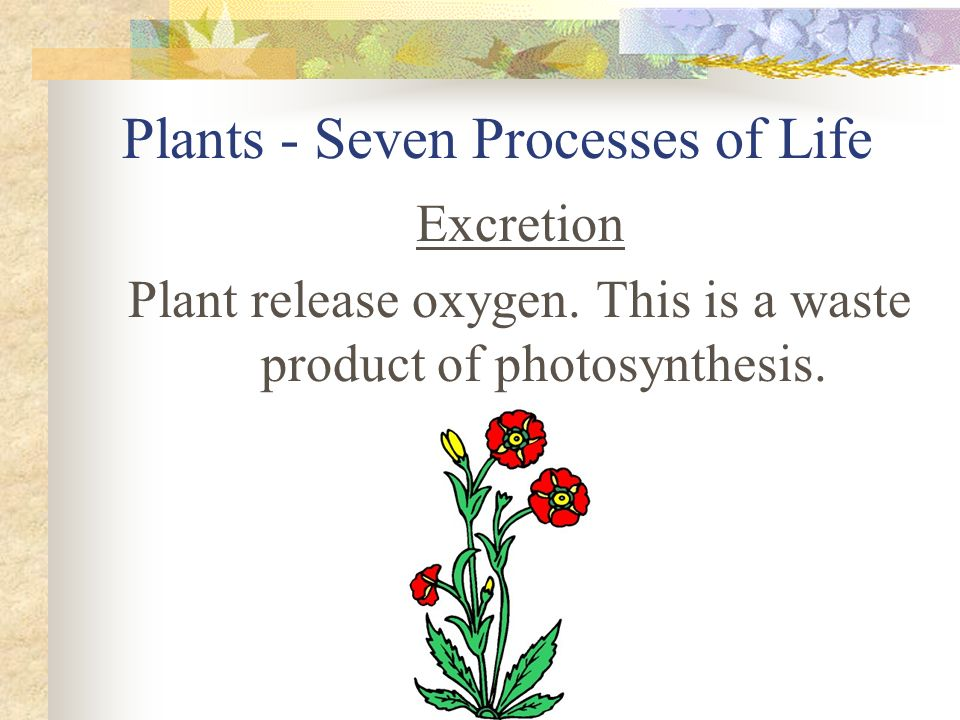 Plants - Seven Processes of Life