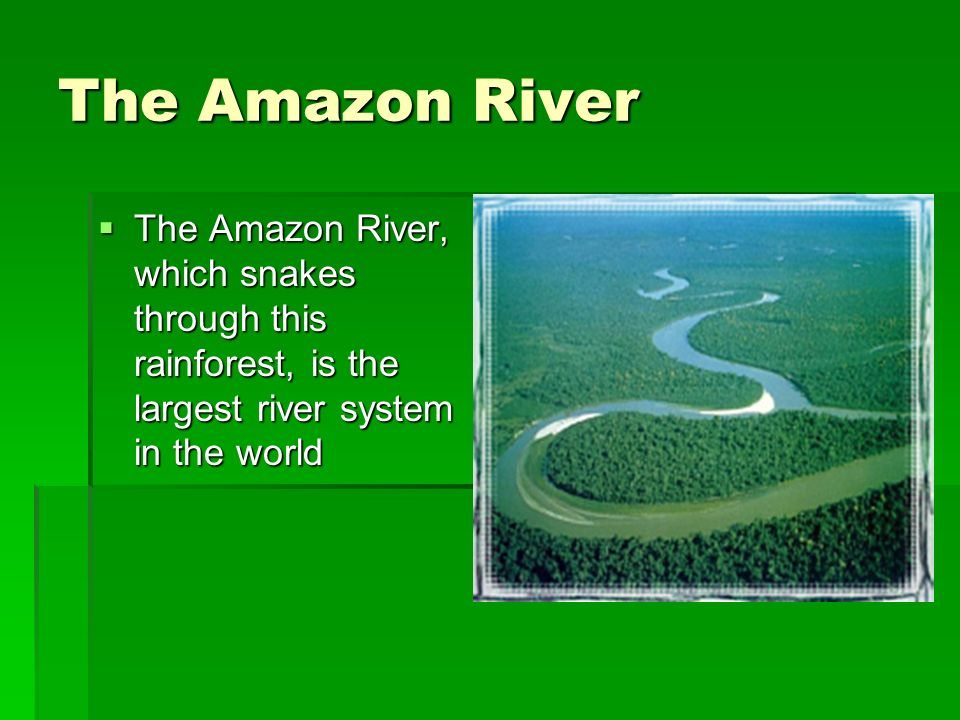 The Amazon River The Amazon River, which snakes through this rainforest, is the largest river system in the world.
