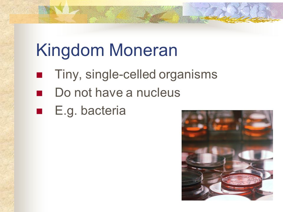 Kingdom Moneran Tiny, single-celled organisms Do not have a nucleus
