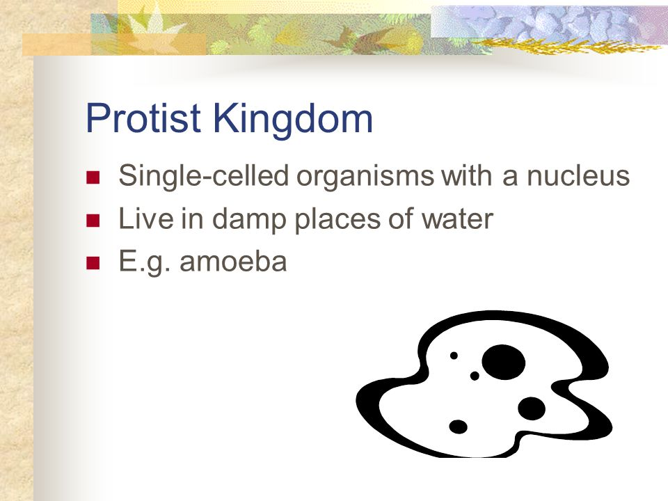 Protist Kingdom Single-celled organisms with a nucleus