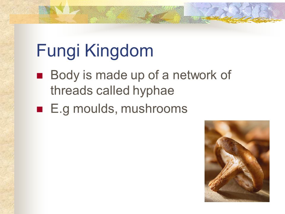 Fungi Kingdom Body is made up of a network of threads called hyphae