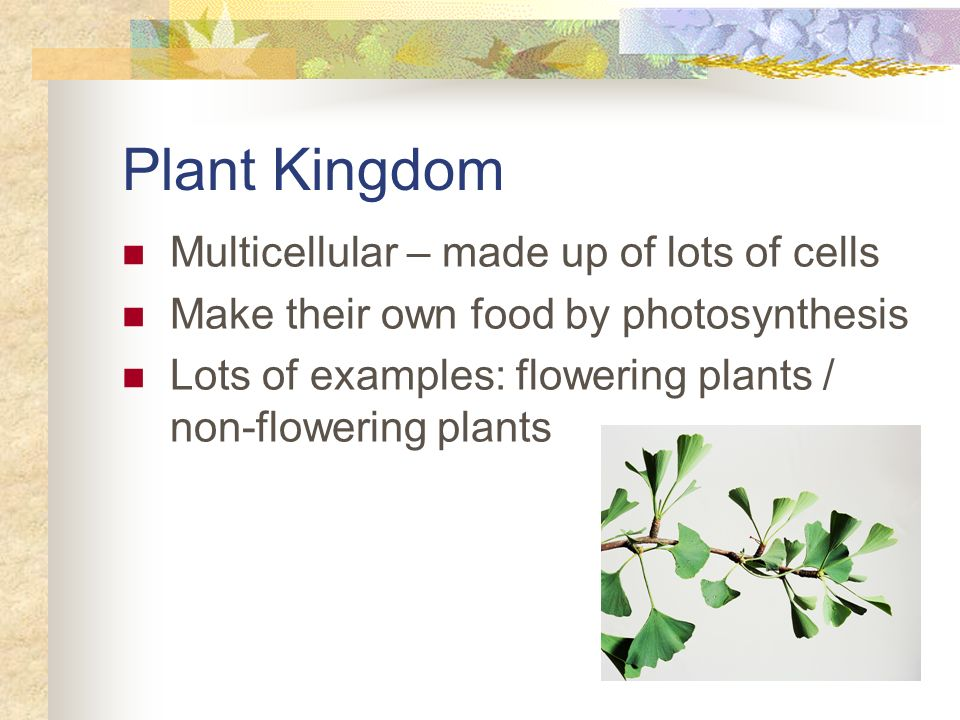 Plant Kingdom Multicellular – made up of lots of cells