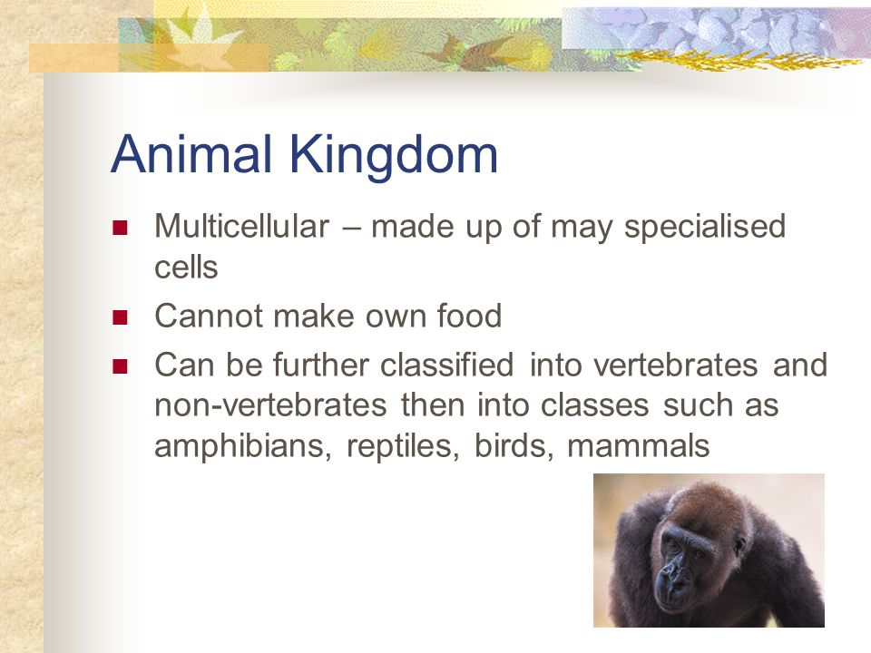 Animal Kingdom Multicellular – made up of may specialised cells