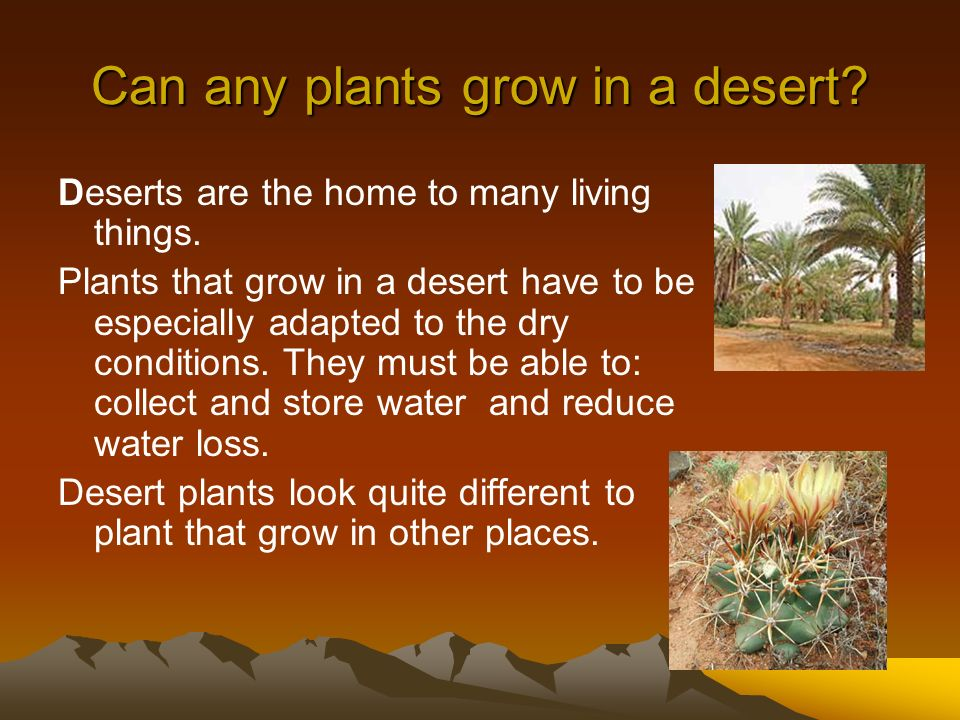 Can any plants grow in a desert