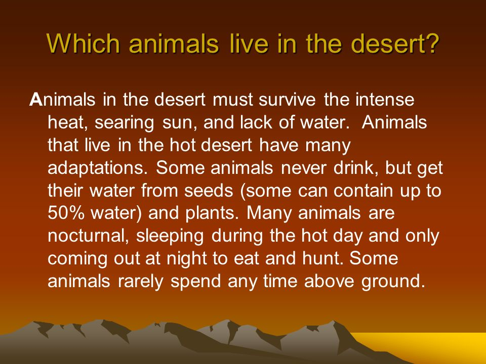 Which animals live in the desert