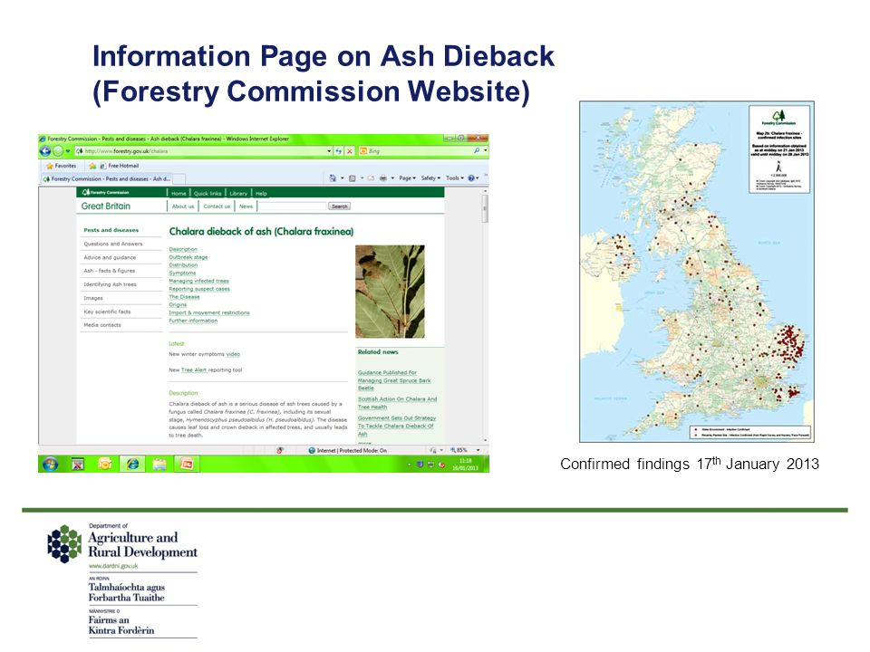Information Page on Ash Dieback (Forestry Commission Website)