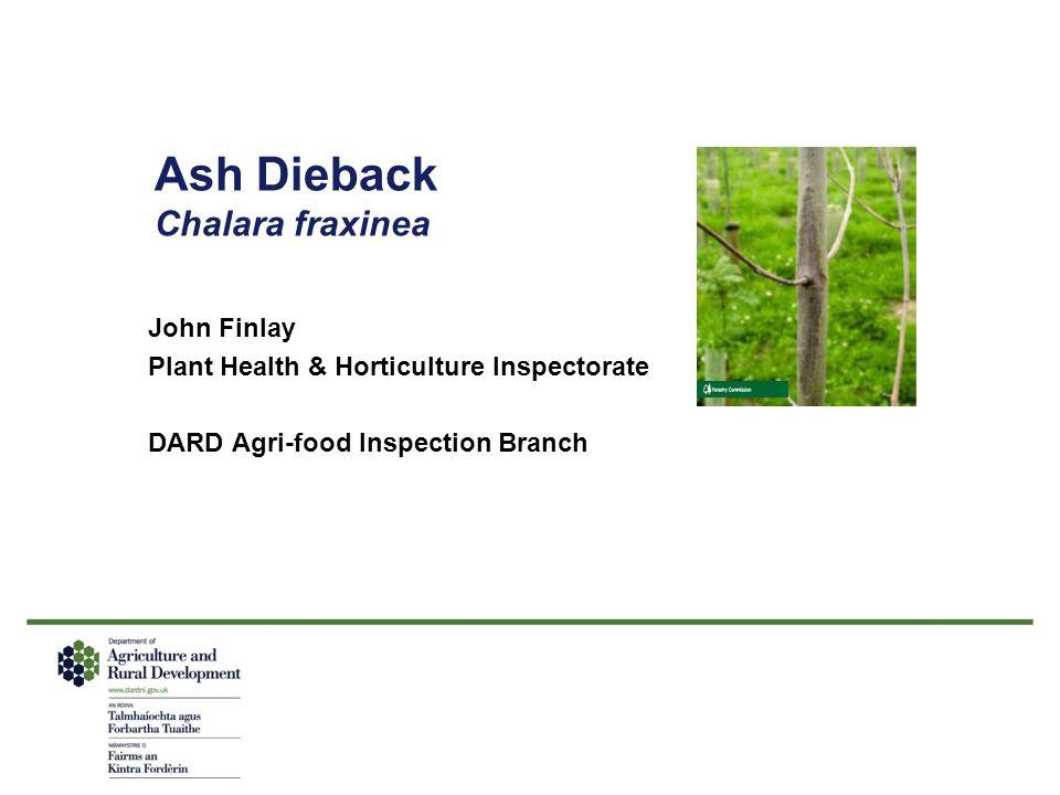 Ash Dieback Chalara fraxinea