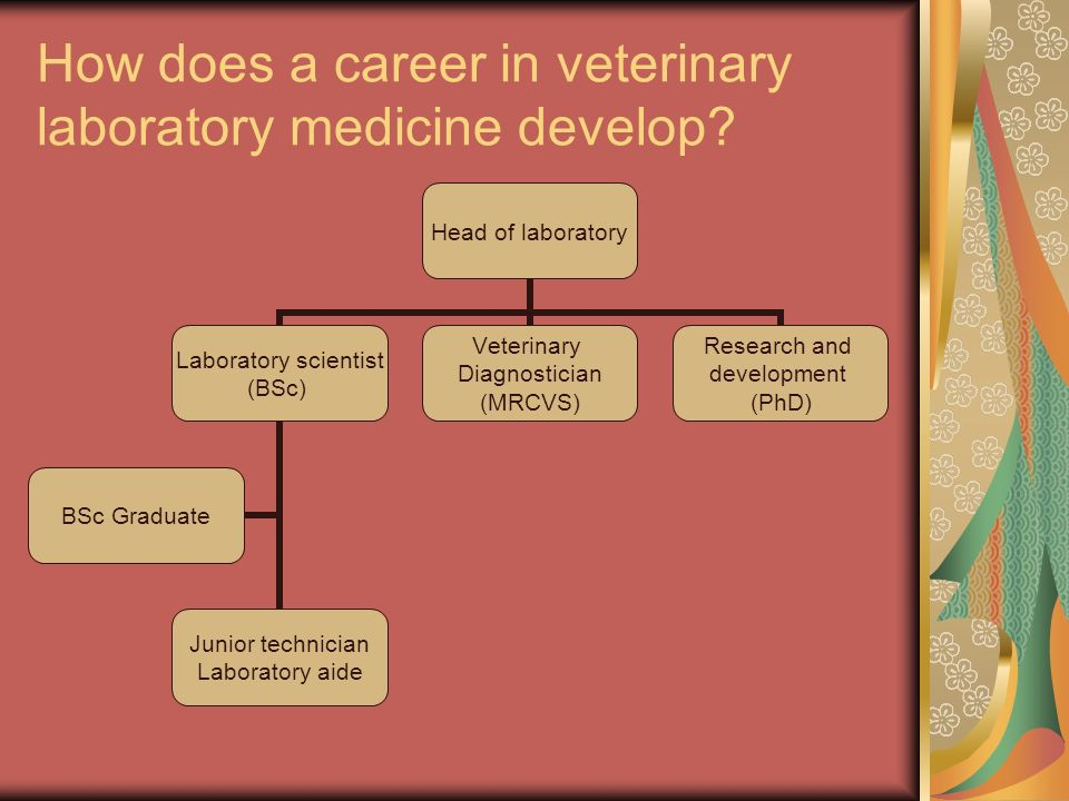 How does a career in veterinary laboratory medicine develop