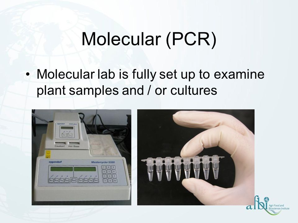 Molecular (PCR) Molecular lab is fully set up to examine plant samples and / or cultures